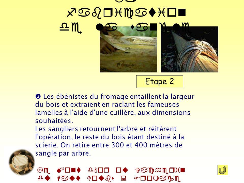 Le Mont d'or ou Vacherin du Haut Doubs : Fromage AOC Etape 1 Sitôt l'arbre à terre, les bûcheron retire le noir (la première écorce) à l'aide d'une pl
