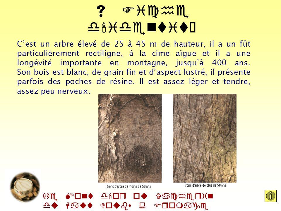 Le Mont d'or ou Vacherin du Haut Doubs : Fromage AOC Lépicéa fait parti de la famille des pinacècres. Il se trouve à létat spontané dans les Alpes du