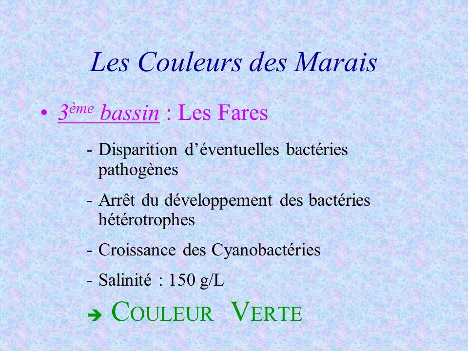 4 ème bassin : Les Adernes -Diminution des Cyanobactéries -Développements : Bactéries halophiles extrêmes Dunaliella salina (algue planctonique) -Salinité : jusquà 250 g/L C OULEUR R OSE Les Couleurs des Marais