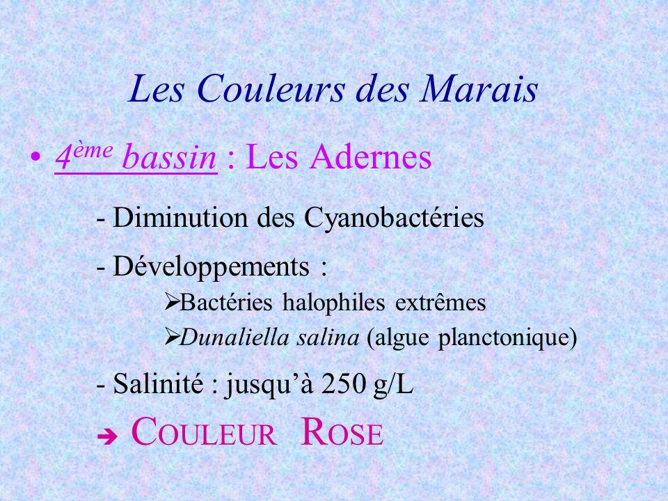 5 ème bassin : Les Oeillets -Survie des bactéries halophiles extrêmes -Cristallisation de la fleur de sel -Salinité : 350 g/L C OULEUR B LANCHE Les Couleurs des Marais