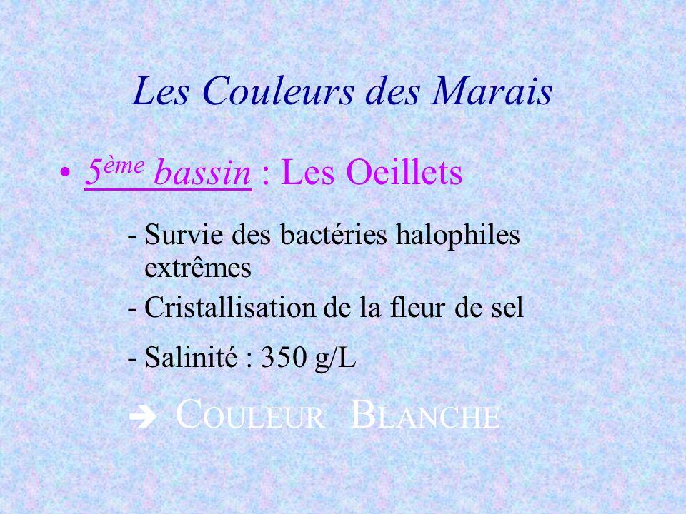 5 ème bassin : Les Oeillets -Survie des bactéries halophiles extrêmes -Cristallisation de la fleur de sel -Salinité : 350 g/L C OULEUR B LANCHE Les Co
