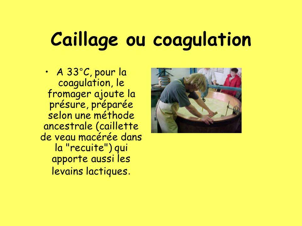 Caillage ou coagulation A 33°C, pour la coagulation, le fromager ajoute la présure, préparée selon une méthode ancestrale (caillette de veau macérée d