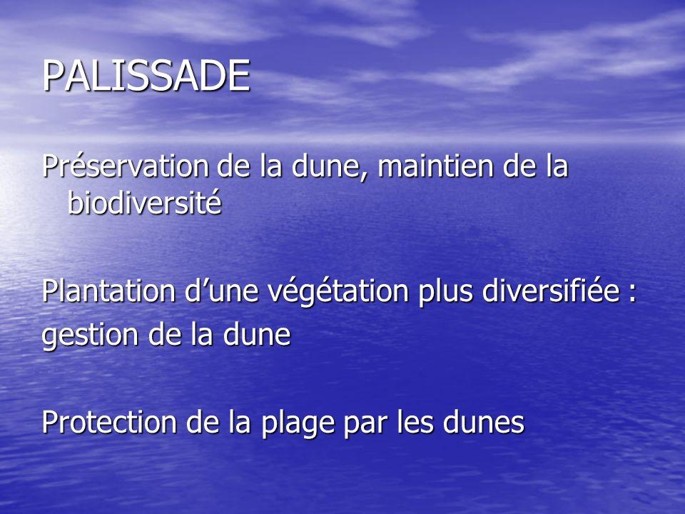 PALISSADE Préservation de la dune, maintien de la biodiversité Plantation dune végétation plus diversifiée : gestion de la dune Protection de la plage