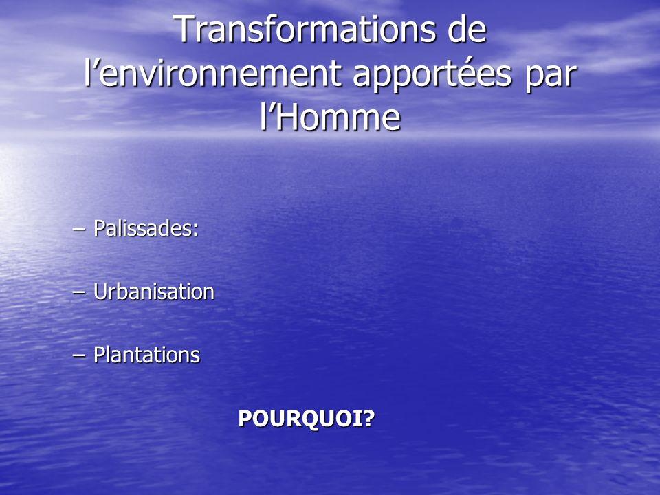 Transformations de lenvironnement apportées par lHomme –Palissades: –Urbanisation –Plantations POURQUOI?