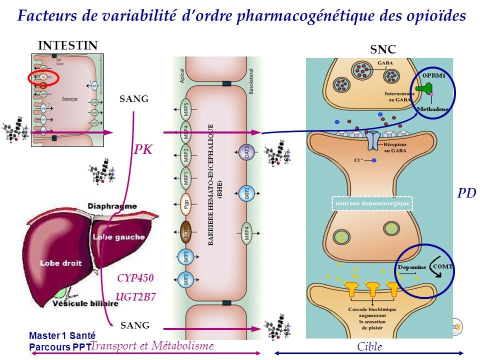 Master 1 Santé Parcours PPT Facteurs de variabilité dordre pharmacogénétique des opioïdes PK PD SANG INTESTIN SNC Transport et Métabolisme Cible SANG