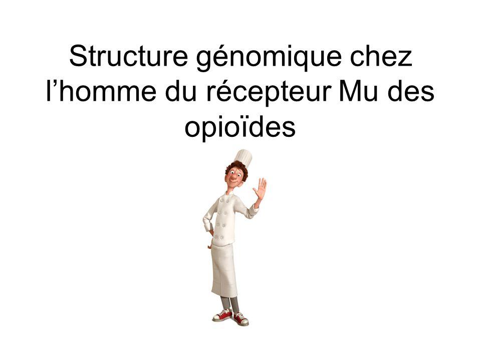 Structure génomique chez lhomme du récepteur Mu des opioïdes
