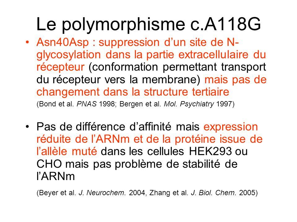 Le polymorphisme c.A118G Asn40Asp : suppression dun site de N- glycosylation dans la partie extracellulaire du récepteur (conformation permettant transport du récepteur vers la membrane) mais pas de changement dans la structure tertiaire (Bond et al.