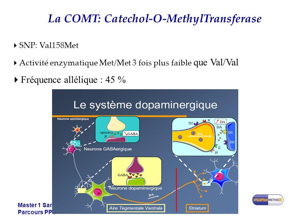 Master 1 Santé Parcours PPT La COMT: Catechol-O-MethylTransferase SNP: Val158Met Activité enzymatique Met/Met 3 fois plus faible que Val/Val Fréquence allélique : 45 %