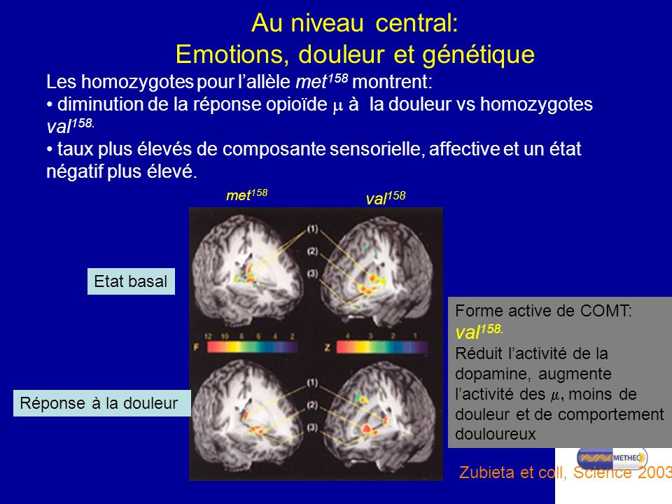 Master 1 Santé Parcours PPT Au niveau central: Emotions, douleur et génétique Etat basal Réponse à la douleur Forme active de COMT: val 158. Réduit la
