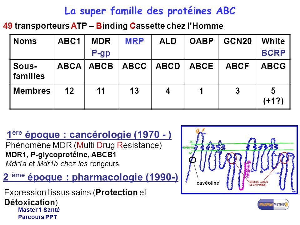 Master 1 Santé Parcours PPT NomsABC1MDR P-gp MRPALDOABPGCN20White BCRP Sous- familles ABCAABCBABCCABCDABCEABCFABCG Membres1211134135 (+1?) 49 transporteurs ATP – Binding Cassette chez lHomme 1 ère époque : cancérologie (1970 - ) Phénomène MDR (Multi Drug Resistance) MDR1, P-glycoprotéine, ABCB1 Mdr1a et Mdr1b chez les rongeurs cavéoline 2 ème époque : pharmacologie (1990-) Expression tissus sains (Protection et Détoxication) La super famille des protéines ABC