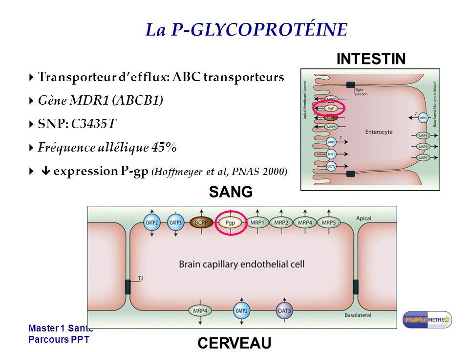 Master 1 Santé Parcours PPT La P-GLYCOPROTÉINE Transporteur defflux: ABC transporteurs Gène MDR1 (ABCB1) SNP: C3435T Fréquence allélique 45% expression P-gp (Hoffmeyer et al, PNAS 2000) INTESTIN SANG CERVEAU