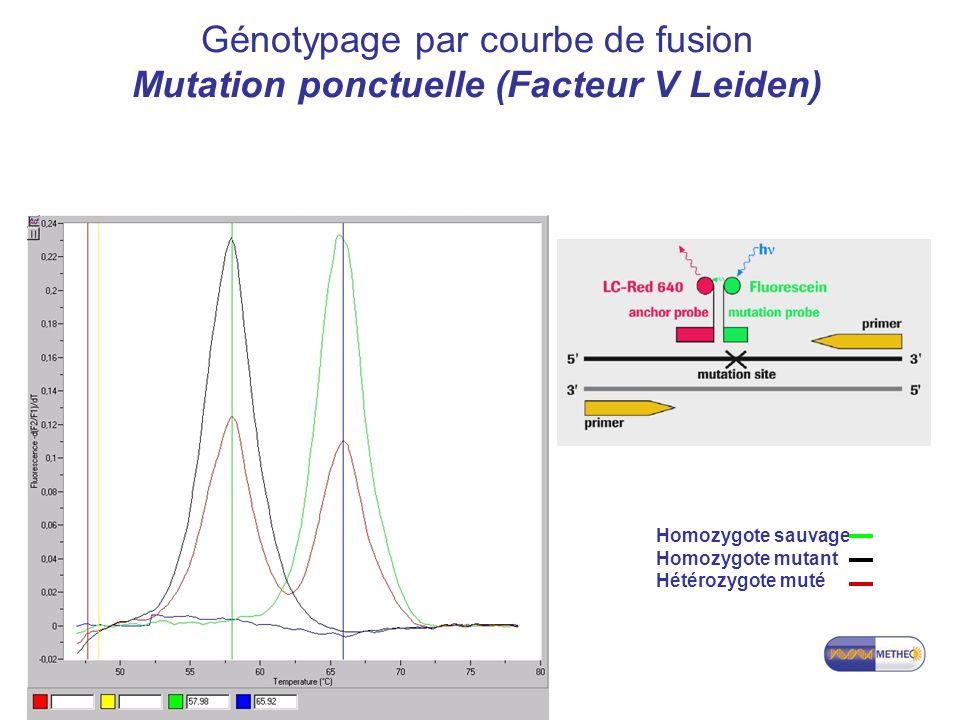 Master 1 Santé Parcours PPT Génotypage par courbe de fusion Mutation ponctuelle (Facteur V Leiden) Homozygote sauvage Homozygote mutant Hétérozygote muté
