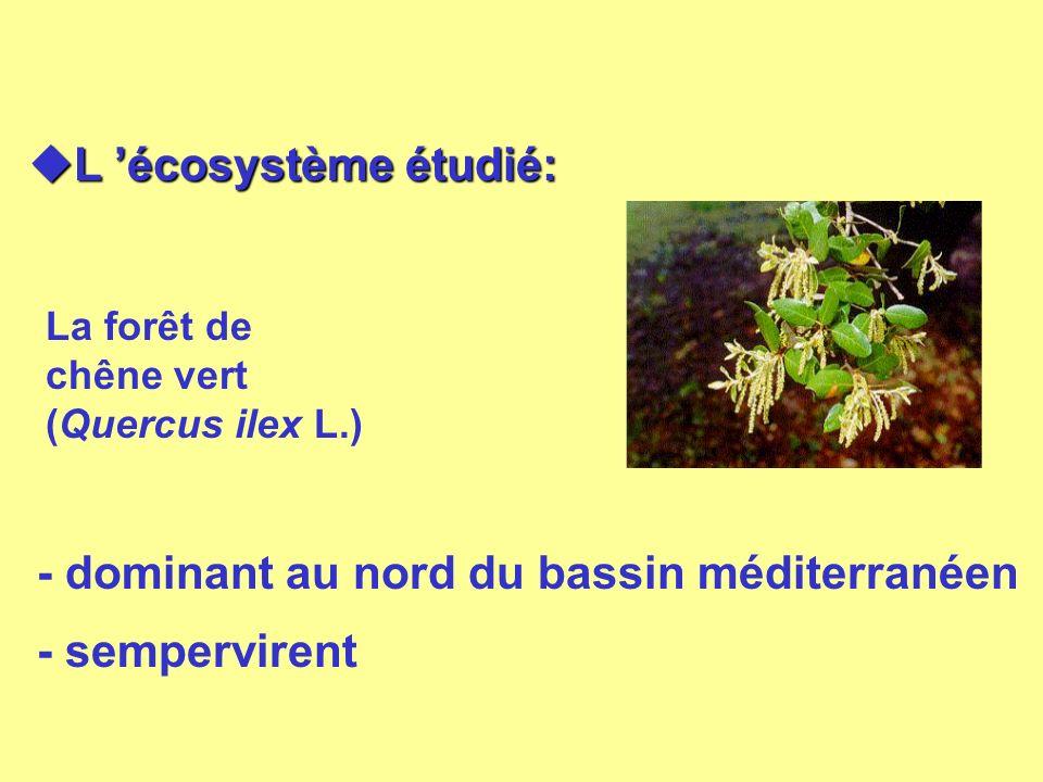 L écosystème étudié: L écosystème étudié: La forêt de chêne vert (Quercus ilex L.) - dominant au nord du bassin méditerranéen - sempervirent