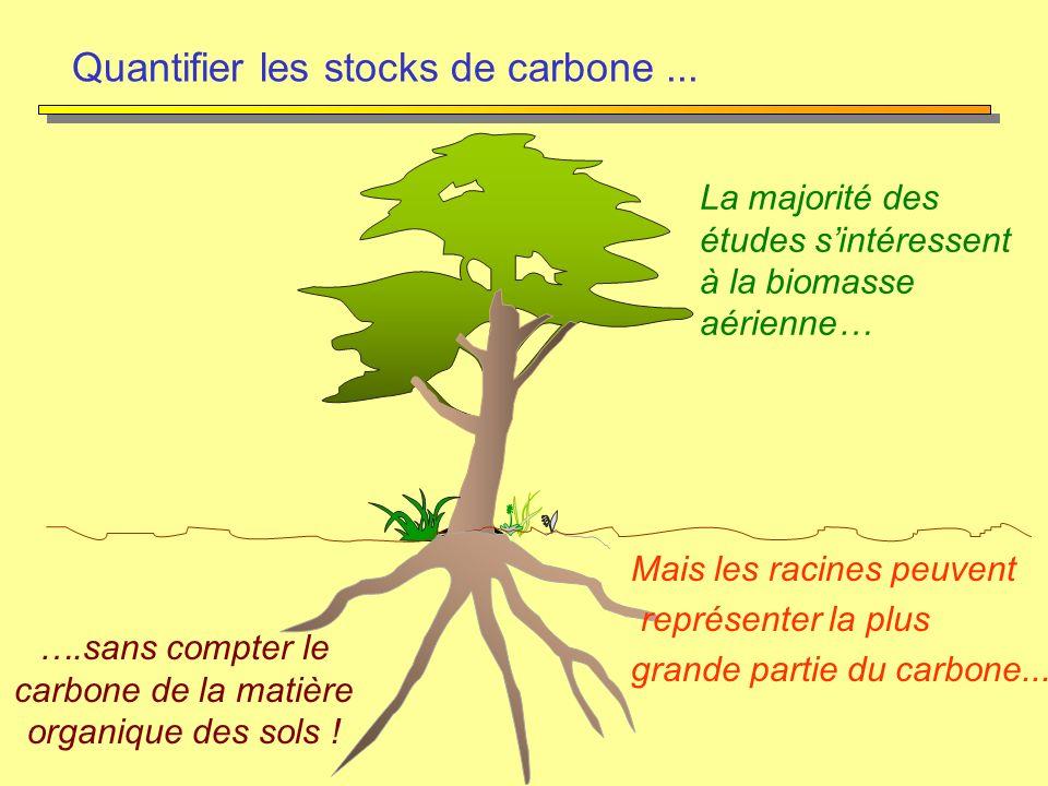 La majorité des études sintéressent à la biomasse aérienne… Mais les racines peuvent représenter la plus grande partie du carbone... Quantifier les st