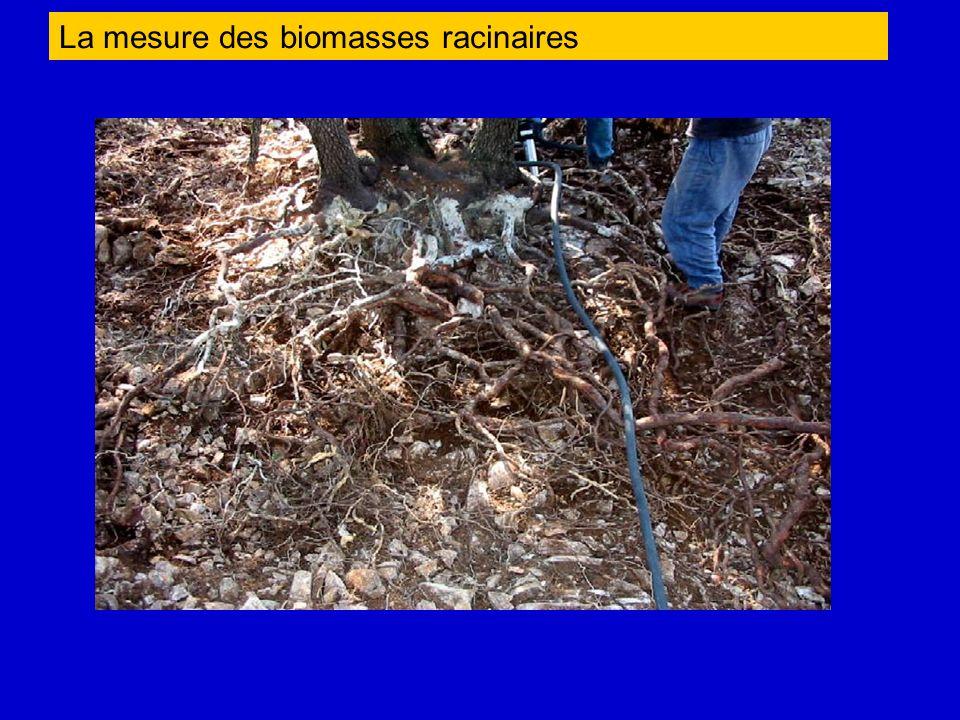 La mesure des biomasses racinaires