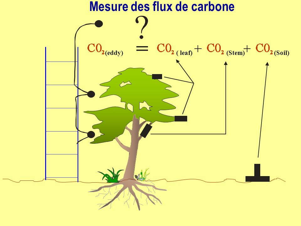 (eddy)( leaf)(Soil)(Stem) Mesure des flux de carbone