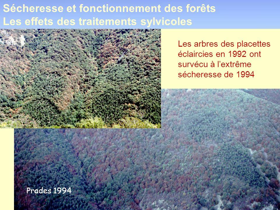 Les arbres des placettes éclaircies en 1992 ont survécu à lextrême sécheresse de 1994 Prades 1994 Sécheresse et fonctionnement des forêts Les effets d