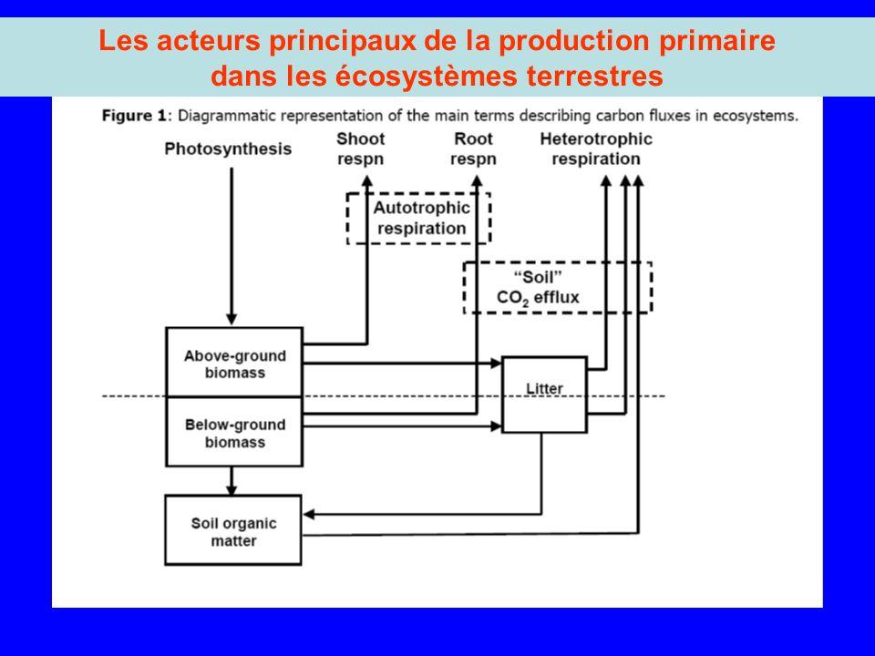 Les acteurs principaux de la production primaire dans les écosystèmes terrestres