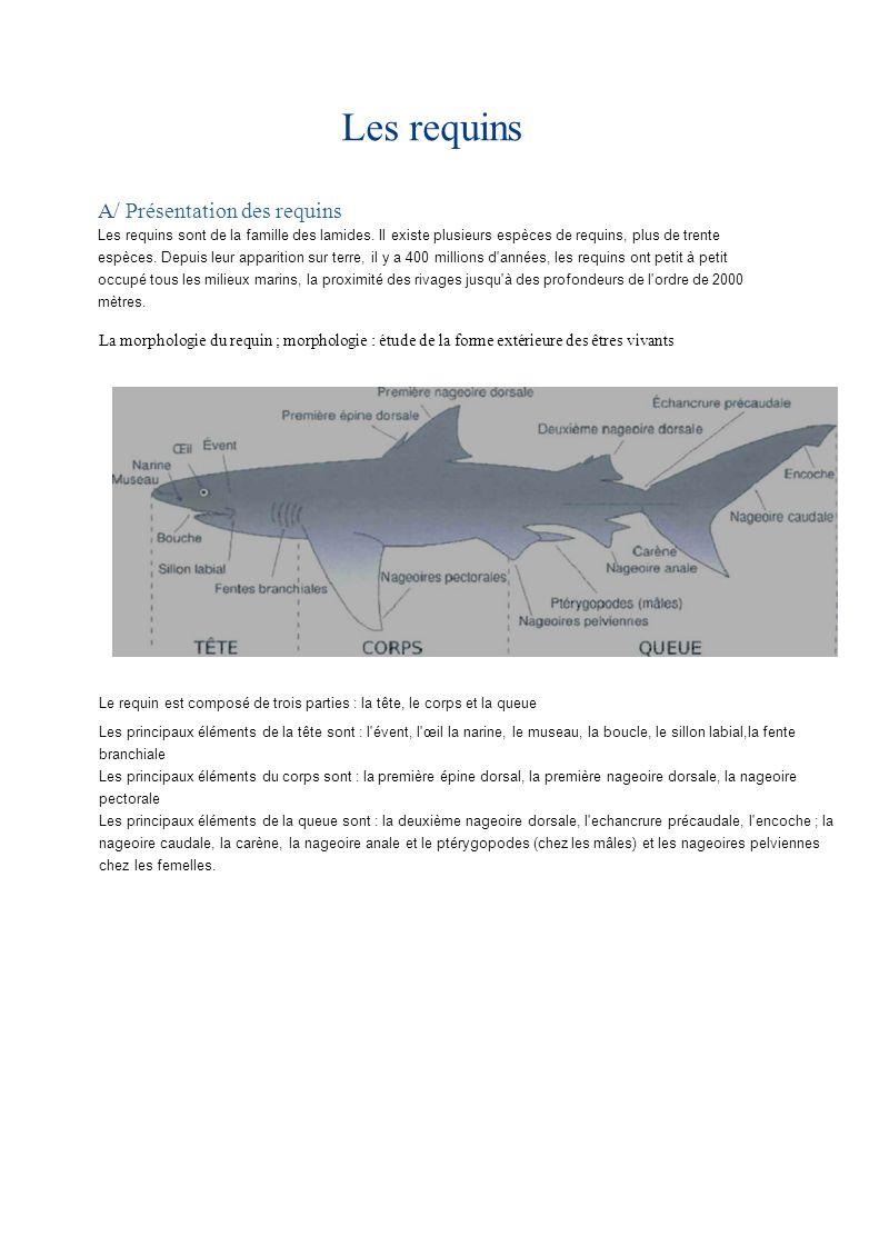 Les requins A/ Présentation des requins Les requins sont de la famille des lamides. Il existe plusieurs espèces de requins, plus de trente espèces. De