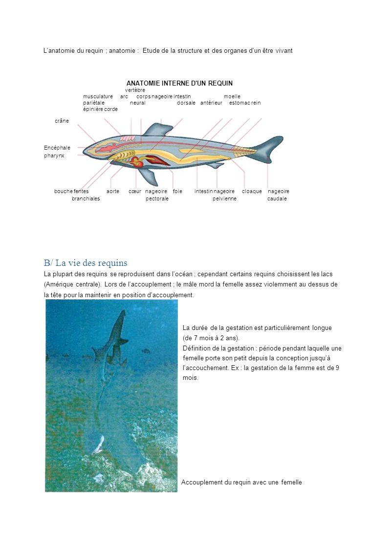 L'anatomie du requin ; anatomie : Etude de la structure et des organes d'un être vivant ANATOMIE INTERNE D'UN REQUIN vertèbre musculature arc corps na