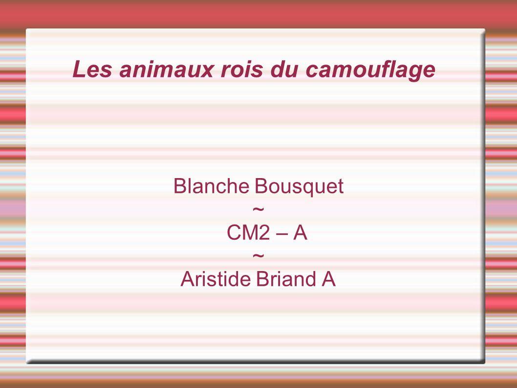 Les animaux rois du camouflage Blanche Bousquet ~ CM2 – A ~ Aristide Briand A