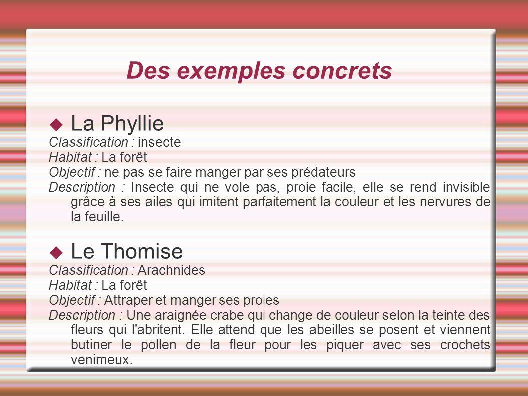 Des exemples concrets La Phyllie Classification : insecte Habitat : La forêt Objectif : ne pas se faire manger par ses prédateurs Description : Insect