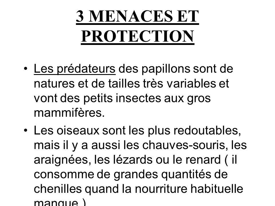 3 MENACES ET PROTECTION Les prédateurs des papillons sont de natures et de tailles très variables et vont des petits insectes aux gros mammifères. Les