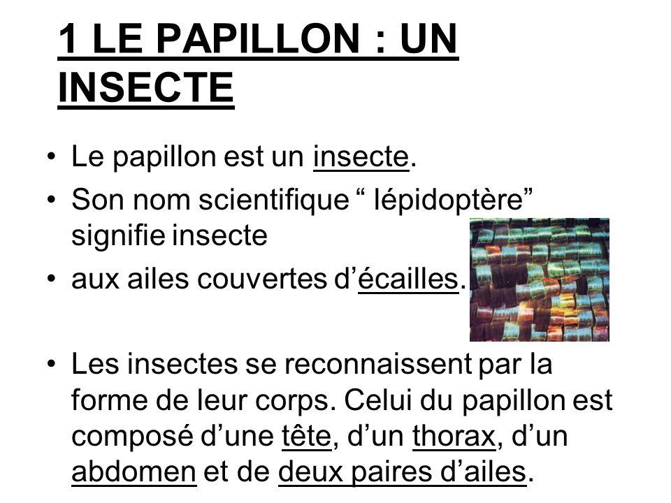 Les papillons sont aussi menacés par l homme qui détruit son lieu de vie et utilise des insecticides.