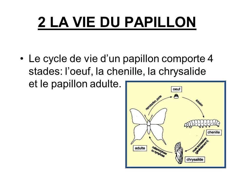 2 LA VIE DU PAPILLON Le cycle de vie dun papillon comporte 4 stades: loeuf, la chenille, la chrysalide et le papillon adulte.