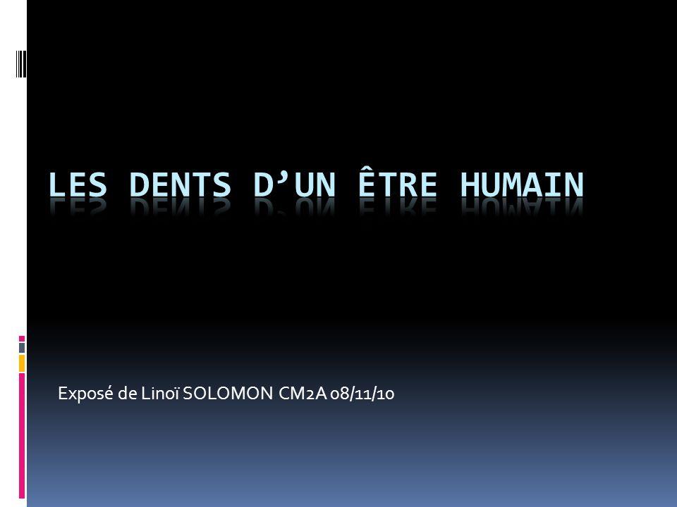 Exposé de Linoï SOLOMON CM2A 08/11/10