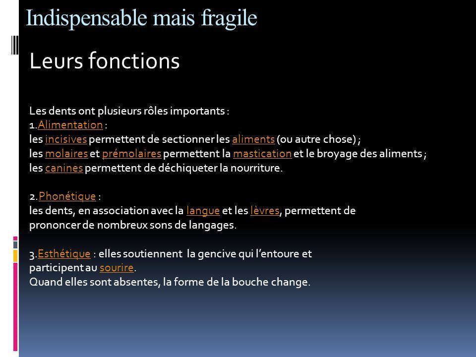 Indispensable mais fragile Leurs fonctions Les dents ont plusieurs rôles importants : 1.Alimentation :Alimentation les incisives permettent de section
