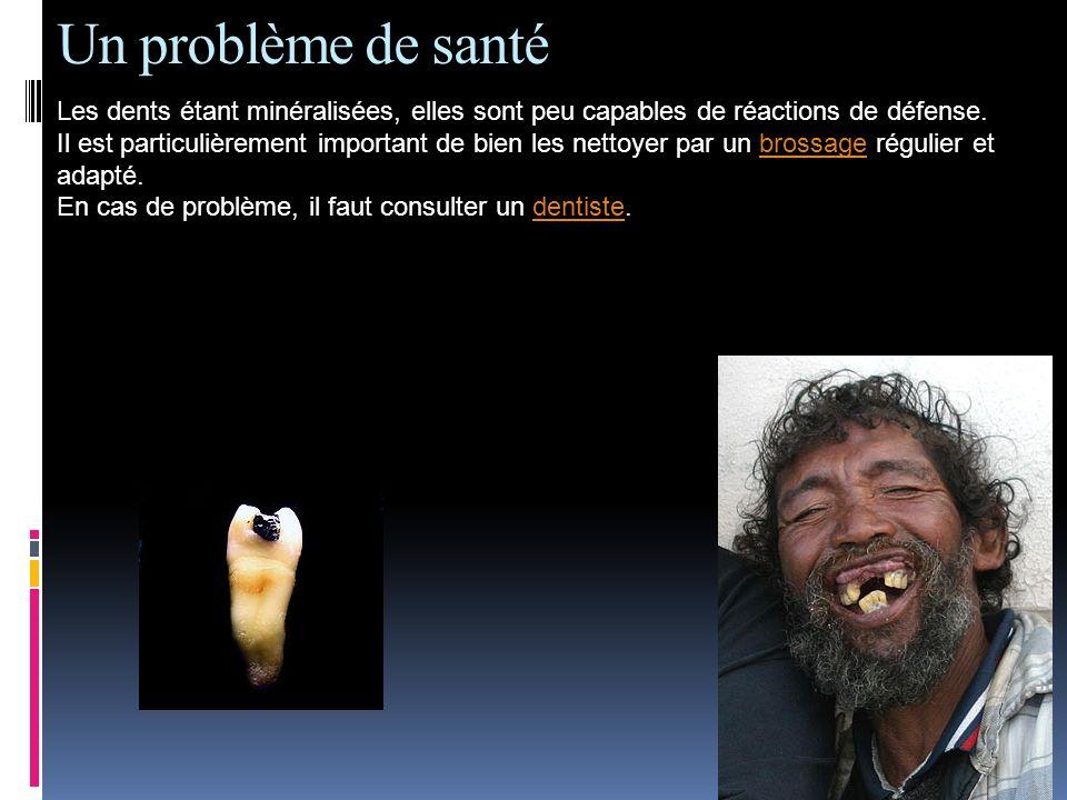 Un problème de santé Les dents étant minéralisées, elles sont peu capables de réactions de défense. Il est particulièrement important de bien les nett
