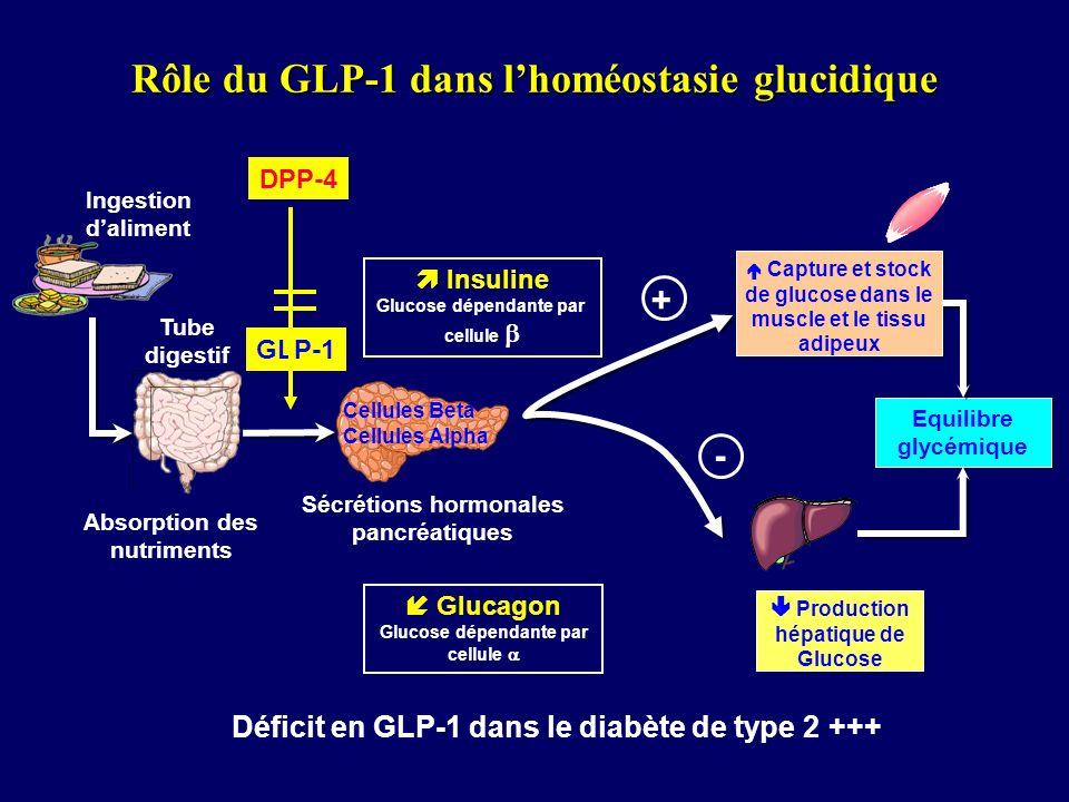 Tube digestif Ingestion daliment Cellules Beta Cellules Alpha Insuline Glucose dépendante par cellule Absorption des nutriments Sécrétions hormonales