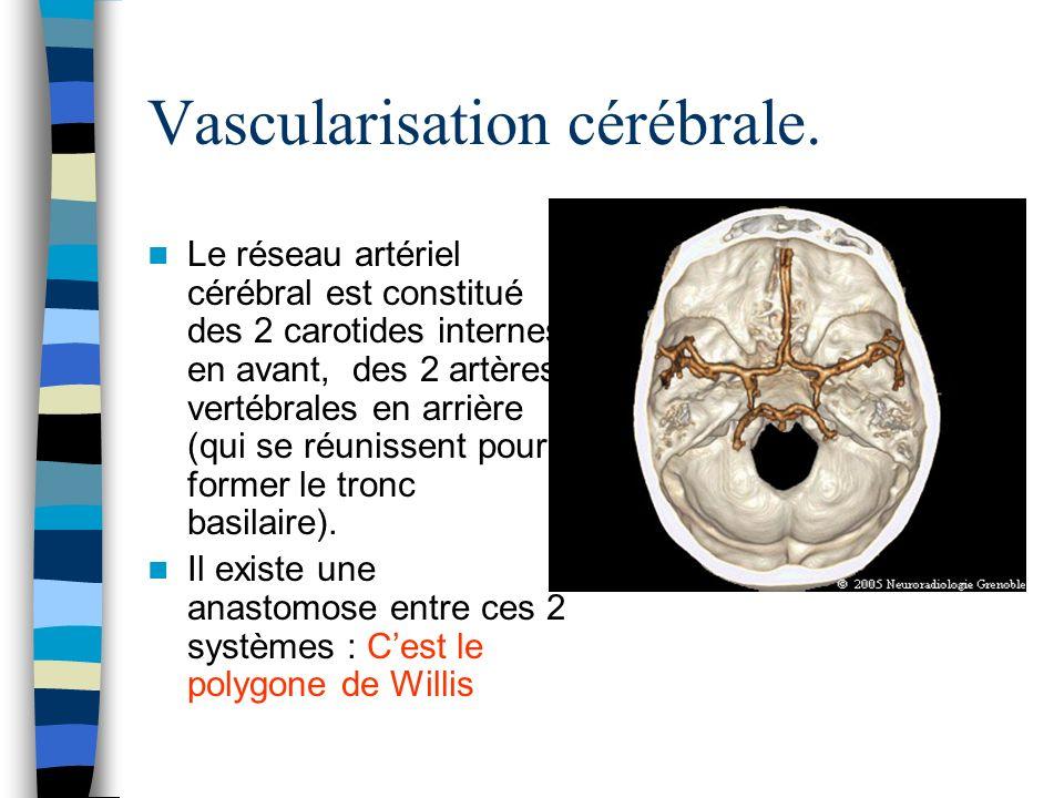 Vascularisation cérébrale. Le réseau artériel cérébral est constitué des 2 carotides internes en avant, des 2 artères vertébrales en arrière (qui se r