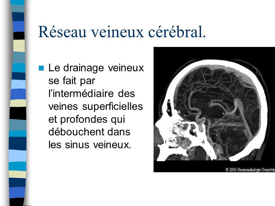Réseau veineux cérébral. Le drainage veineux se fait par lintermédiaire des veines superficielles et profondes qui débouchent dans les sinus veineux.