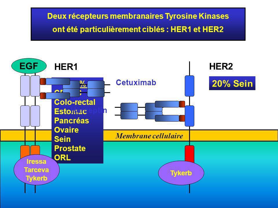Membrane cellulaire Deux récepteurs membranaires Tyrosine Kinases ont été particulièrement ciblés : HER1 et HER2 Shc EGF HER1 HER2 > 50% : CPNPC Colo-