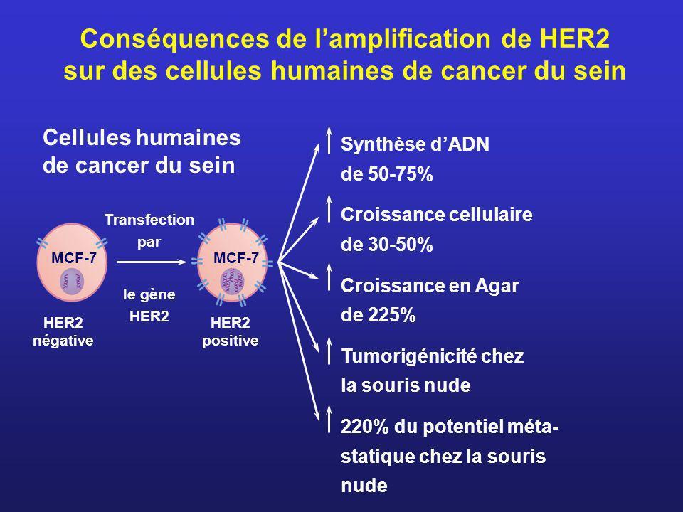 Conséquences de lamplification de HER2 sur des cellules humaines de cancer du sein Cellules humaines de cancer du sein Transfection par le gène HER2 H