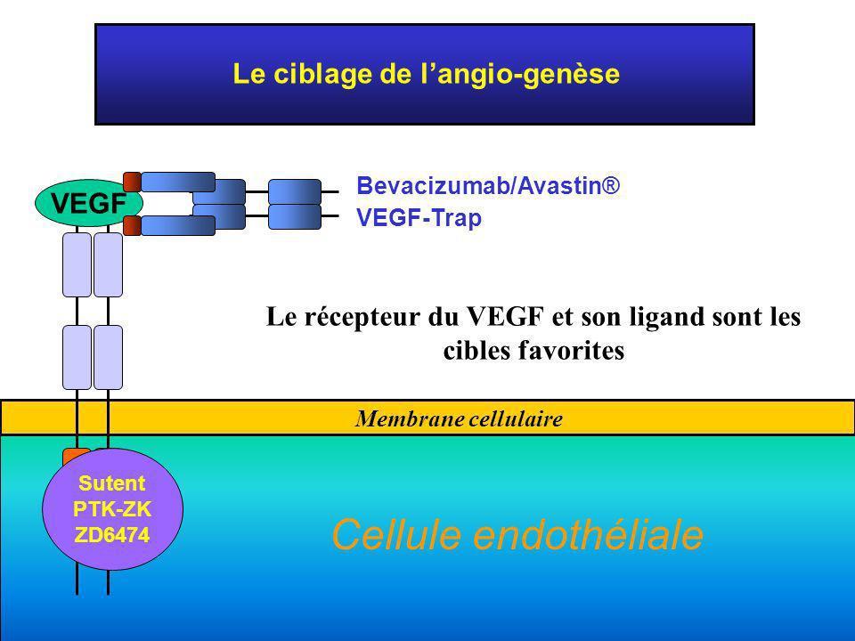 Membrane cellulaire Le ciblage de langio-genèse Shc VEGF Bevacizumab/Avastin® VEGF-Trap Sutent PTK-ZK ZD6474 Le récepteur du VEGF et son ligand sont l
