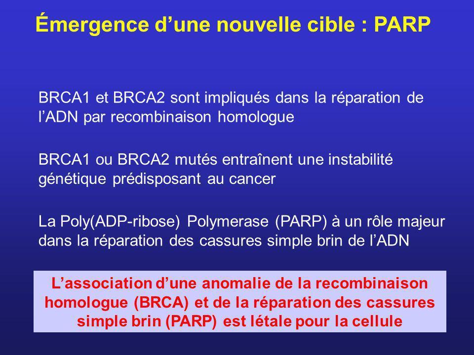 Émergence dune nouvelle cible : PARP La Poly(ADP-ribose) Polymerase (PARP) à un rôle majeur dans la réparation des cassures simple brin de lADN BRCA1