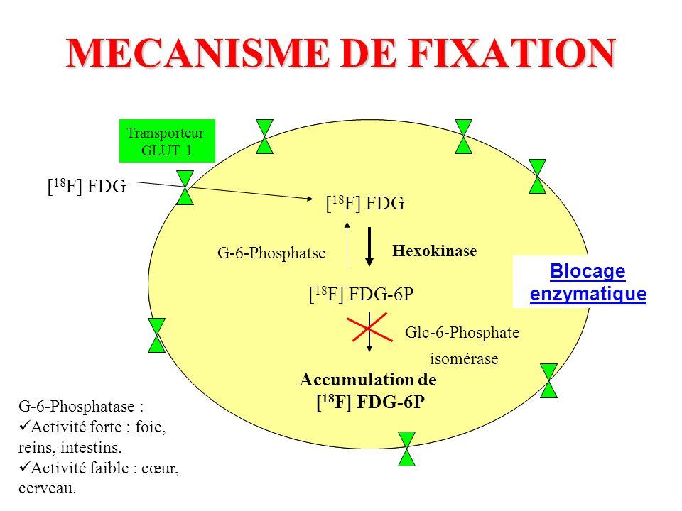MECANISME DE FIXATION Transporteur GLUT 1 [ 18 F] FDG [ 18 F] FDG-6P Accumulation de [ 18 F] FDG-6P Hexokinase Glc-6-Phosphate isomérase G-6-Phosphats