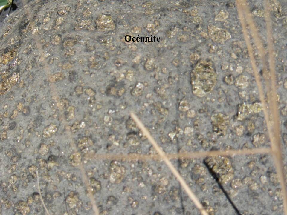 Océanite