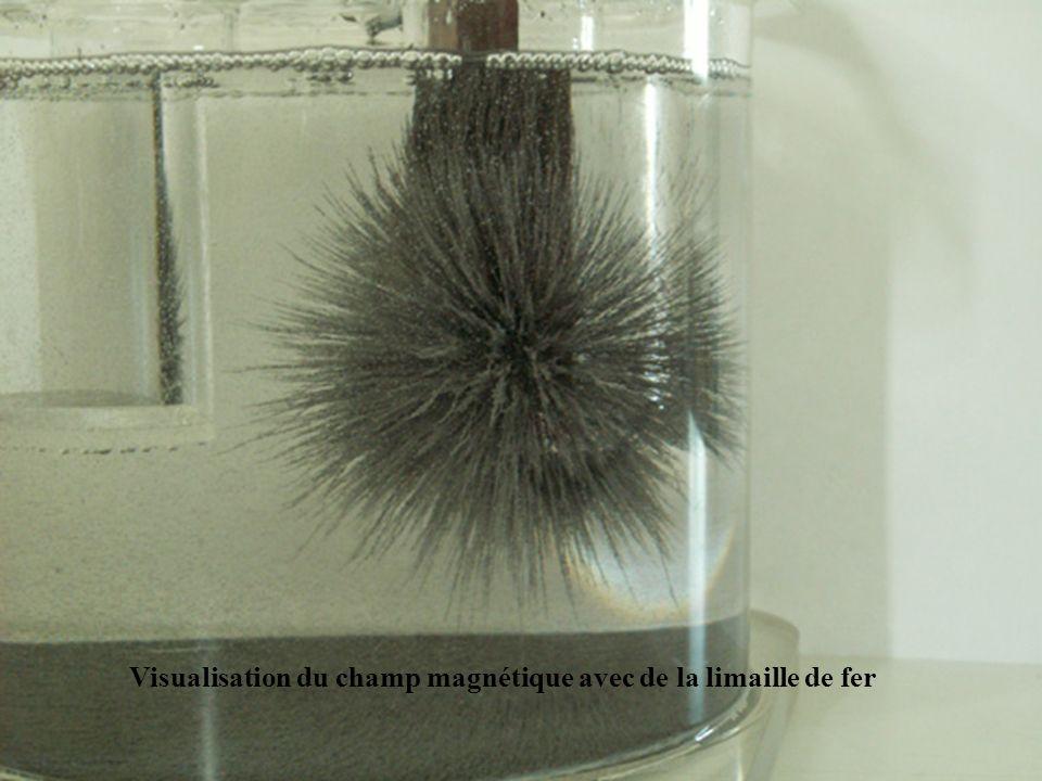 Visualisation du champ magnétique avec de la limaille de fer