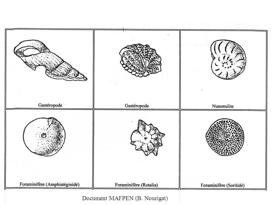 Document MAFPEN (B. Nourigat)
