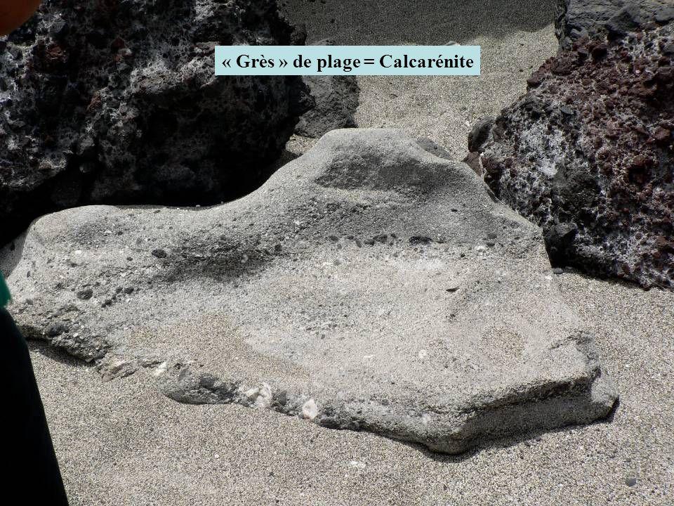 « Grès » de plage = Calcarénite