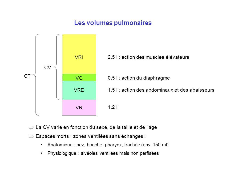 Les volumes pulmonaires VRI VC VRE VR 2,5 l : action des muscles élévateurs 0,5 l : action du diaphragme 1,5 l : action des abdominaux et des abaisseu