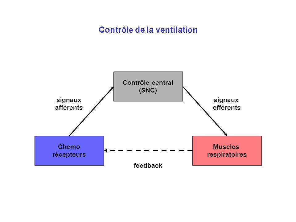 Contrôle de la ventilation Chemo récepteurs Contrôle central (SNC) signaux afférents Muscles respiratoires signaux efférents feedback