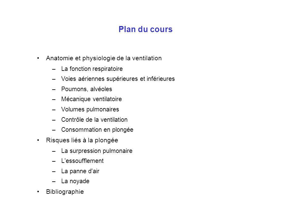Plan du cours Anatomie et physiologie de la ventilation –La fonction respiratoire –Voies aériennes supérieures et inférieures –Poumons, alvéoles –Méca