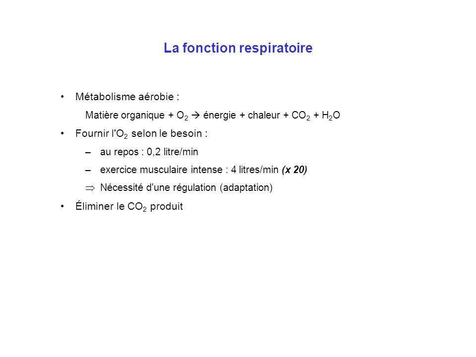 La fonction respiratoire Métabolisme aérobie : Matière organique + O 2 énergie + chaleur + CO 2 + H 2 O Fournir l'O 2 selon le besoin : –au repos : 0,