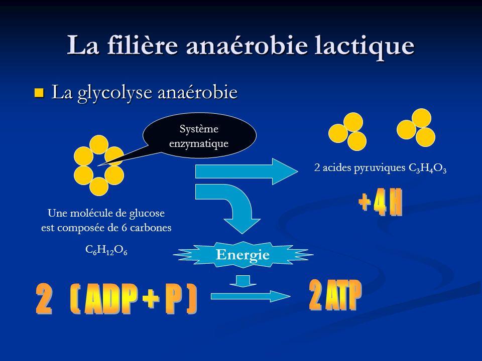 La filière anaérobie lactique La glycolyse anaérobie La glycolyse anaérobie Une molécule de glucose est composée de 6 carbones C 6 H 12 O 6 Système en