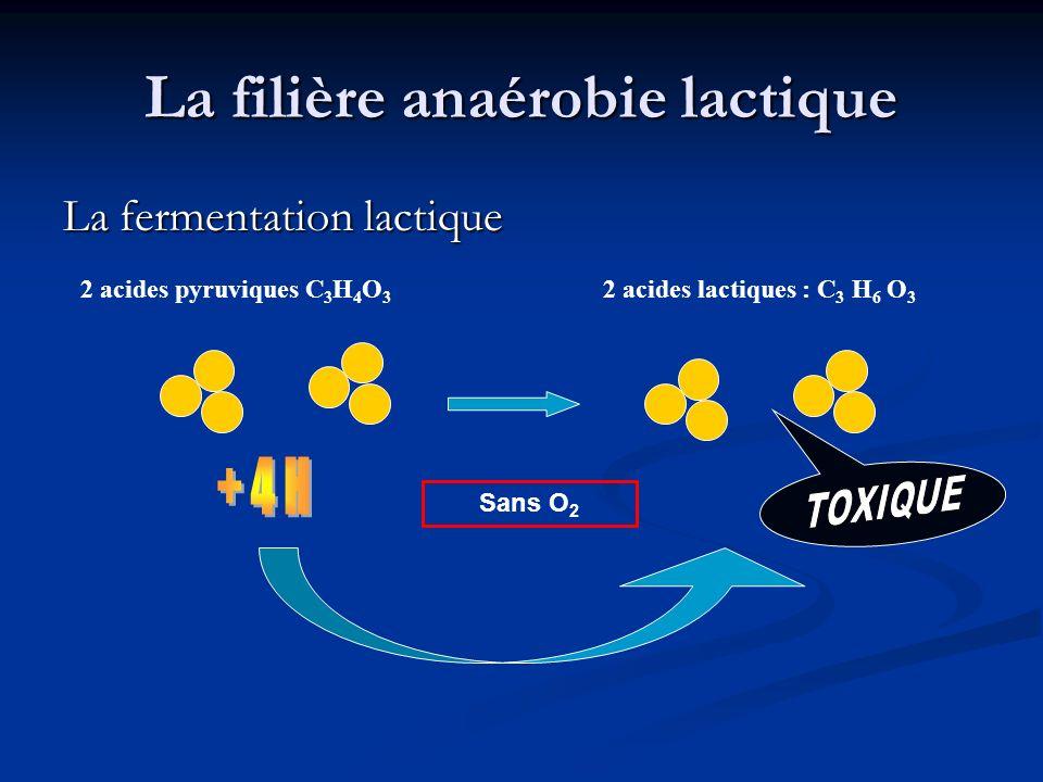 La filière anaérobie lactique La fermentation lactique 2 acides pyruviques C 3 H 4 O 3 2 acides lactiques : C 3 H 6 O 3 Sans O 2